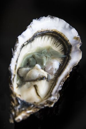 Open oyster on black background