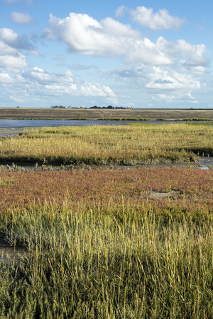 seaweeds: Maritime landscape with heathland, blue sky and cloud, Waddenzee, Friesland, The Netherlands