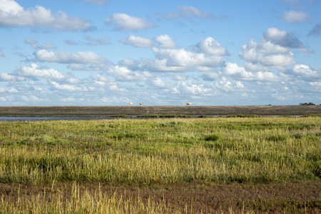 Maritime landscape with heathland, blue sky and cloud, Waddenzee, Friesland, The Netherlands