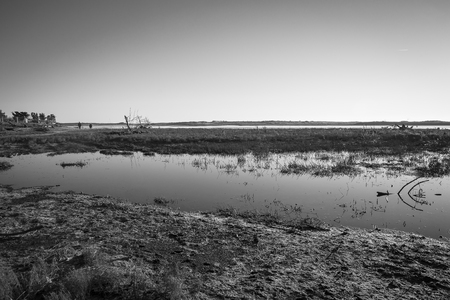 black and white image of lagoon at nature reserve Casse de la Belle Henriette recovered after sea went over the dike after the storm Xynthia in February 2010 Reklamní fotografie
