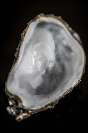Empty oyster on black background