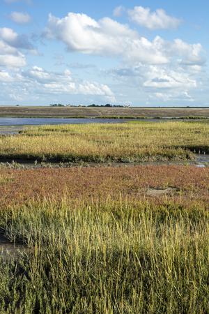 Maritieme landschap met heide, blauwe lucht en wolken, Waddenzee, Friesland, Nederland Stockfoto