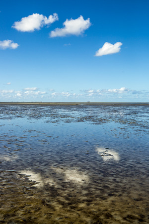 seaweeds: Maritime landscape with reflection of clouds in low tide water, Waddenzee, Friesland, The Netherlands