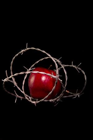 inaccessible: forbidden fruit : apple wrapped in barbed wire on black background Stock Photo