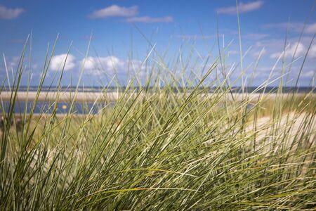 desert ecosystem: sand dunes with grass and a beach, Ameland Island, The Netherlands