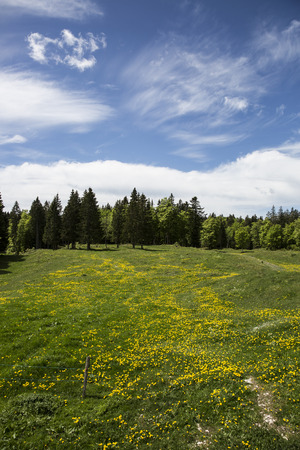 Bucolic mountain landscape with blooming green meadow, Jura, Switzerland