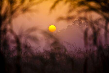 folliage: Sunset on african savanna Stock Photo
