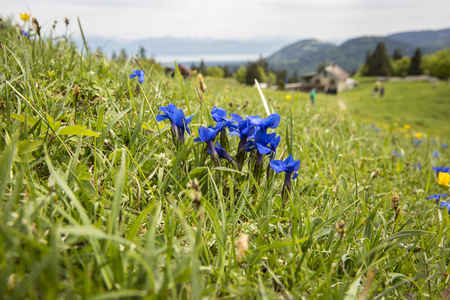 mountain landscape - Dent du Vaulion - Switzerland