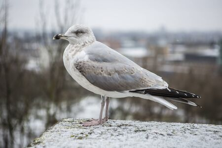 Seagull perched on a wall with city as the background