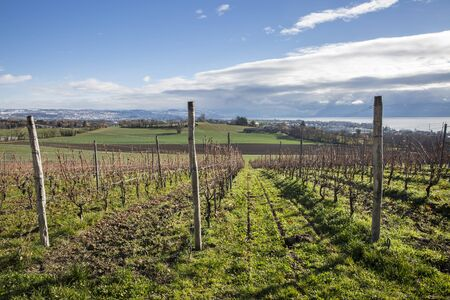 leman: Swiss autumn landscape with vineyards, green field and Leman lake and mountain in the background