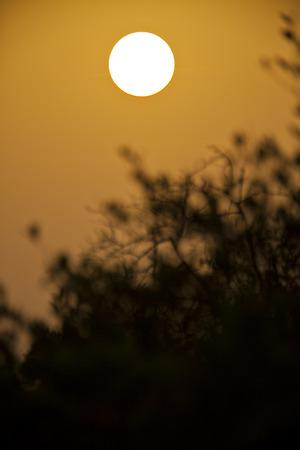 Silhouette of tree in the sunset, Sine Saloum, Senegal