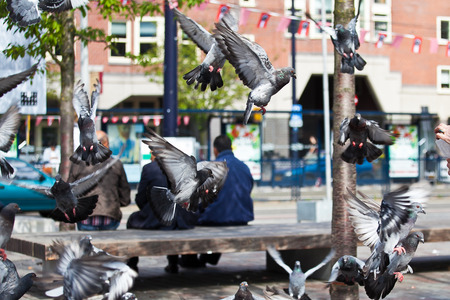 People sitting on a bench in the city, pigeons flying around, Amsterdam Фото со стока