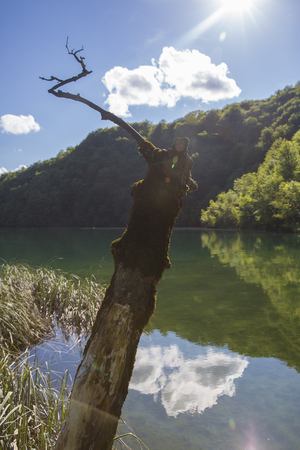 dead tree trunk and a white cloud reflecting in water surface at Plitvice Lakes National Park, Croatia Stock Photo