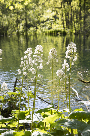 jet stream: beautiful nature at  with close up on the vegetation at Plitvice Lakes National Park, Croatia Foto de archivo