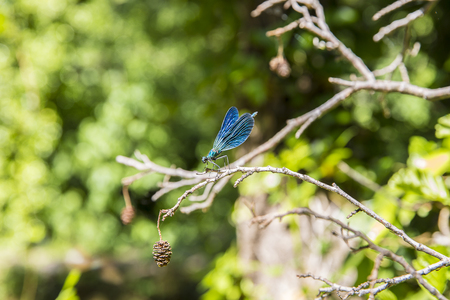 Blue dragonfly peacefully resting on a leaf Stock Photo