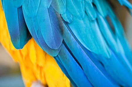 Close up view of blue bird feather photo