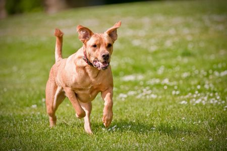A dog running fast at an outside park photo