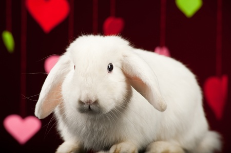 White rabbit with colored valentines.