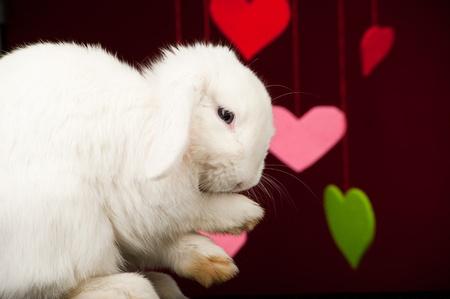 White rabbit washing