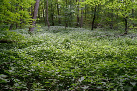 hardwood: Wetland Area in Hardwood Forest Stock Photo