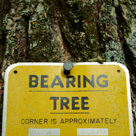 property management: Land Survey Bearing Tree Tag with Corner Information Stock Photo
