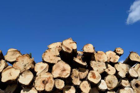 Aspen Populus Tremuloides Pulp Pile