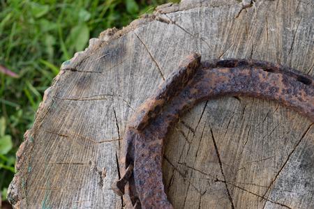 acer saccharum: Wood Splitting Block and Rusty Horseshoe