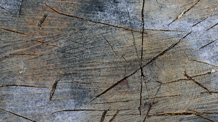saccharum: Closeup of Axe Marks on Sugar Maple (Acer saccharum) Splitting Block