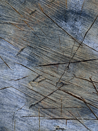 saccharum: Sugar Maple (Acer saccharum) Splitting Block Detail Stock Photo