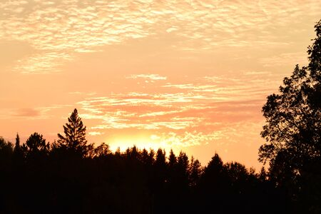 altocumulus: Altocumulus Clouds and Tree Silhouettes at Sunset