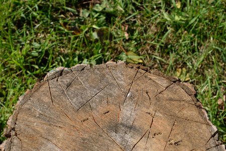 acer saccharum: Closeup of Axe Marks on Chopping Block Stock Photo