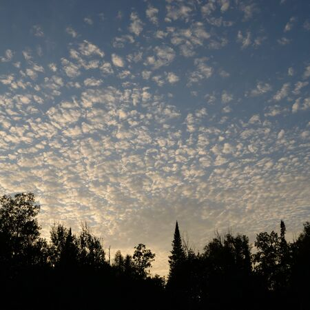 altocumulus: Altocumulus Clouds and Tree Silhouettes in the Evening Stock Photo