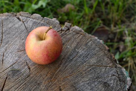 acer saccharum: Organic Apple on Splitting Block