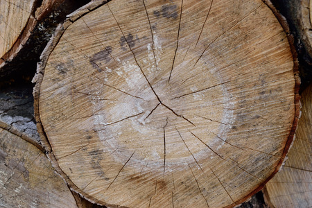 acer: Sugar Maple Acer saccharum Log Ends