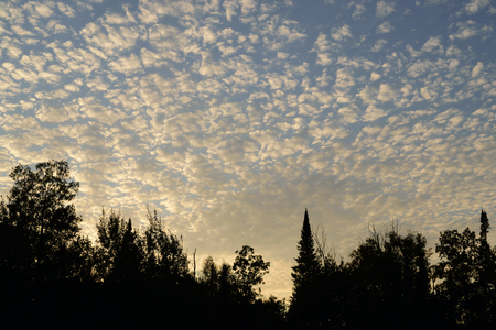 altocumulus: Altocumulus Clouds and Tree Silhouettes at Sundown