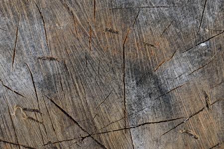 saccharum: Closeup of Sugar Maple Acer saccharum Splitting Block