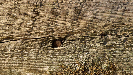 rusty nail: Weathered Wood with Rusty Nail and Moss