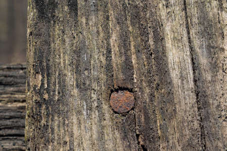 barnwood: Old Rusty Nail in Barnwood