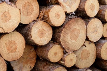 pulp: Detail of Norway Pine (Pinus resinosa) Pulp Stock Photo