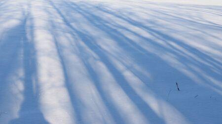 snowy field: Morning Tree Shadows on Snowy Field