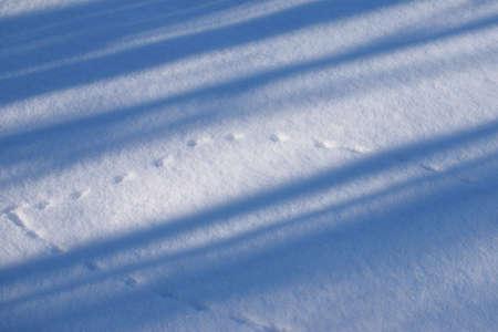 huellas de animales: Pistas animales y sombras en la nieve