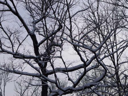 hardwoods: Winter Hardwoods
