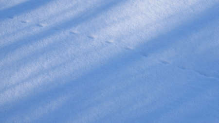 huellas de animales: Pistas animales en la ma�ana del invierno