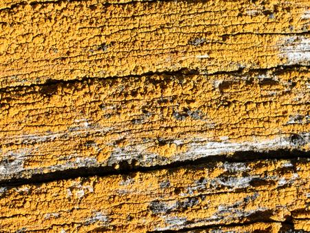 fixer upper: Yellow Lichen on Old Barn Wood