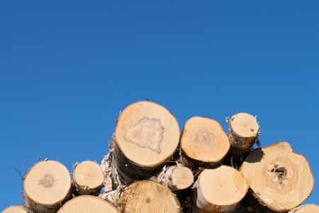 Birch Logs Against Blue Sky