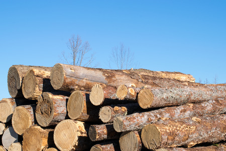 pile of logs: Tamarack Logs in Pile Stock Photo