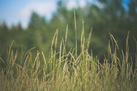 Closeup of Grasses in Field Stock Photo