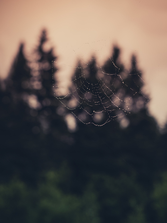 Eerie Forest Web Stock Photo