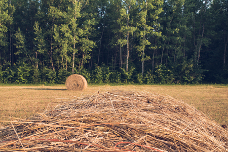 Haybale at Forest Edge