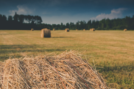 Baled Hay in Field Stock Photo